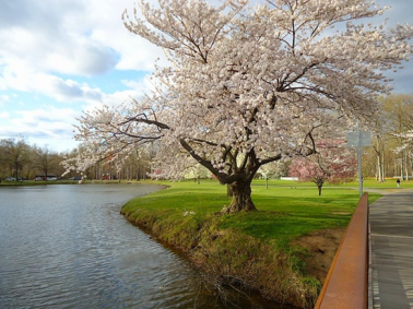 New Jersey in spring